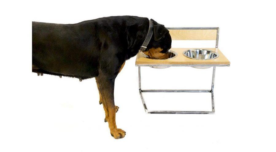 Υπερυψωμένο μπολ σκύλου