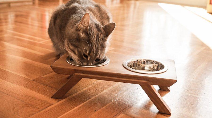 Μπολ γάτας με βάση 4legs